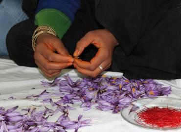 Safran sichert afghanischen Bauern Existenz – Shelter Now leistete Pionierarbeit